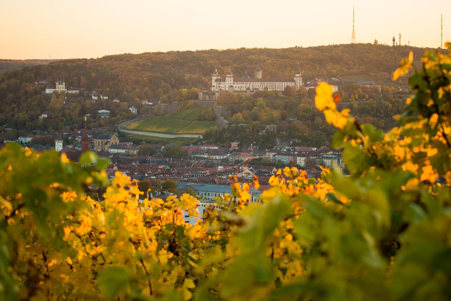 Würzburg Herbst Weinberge